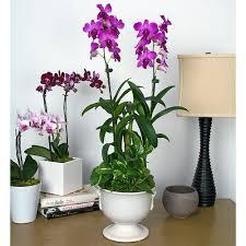 dendrobium orchid fuchsia dendrobium orchid garden in 6 ceramic urn white flower