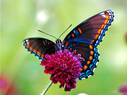 40 top selection of butterflies images