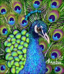 peacock drawing with colour best images collections hd for