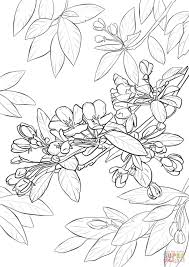 apple blossom coloring page free printable coloring pages