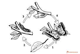 100 monarch butterfly coloring pages save our monarchs symmetry