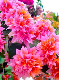 83 best tropical flowers images on pinterest tropical flowers