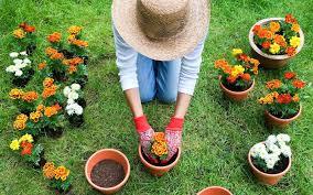 Vegetable Pot Gardening For Beginners Gardening Basics For Beginners Above View Of Tending Garden