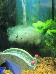fish u0026 aquariums pethelpful