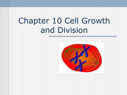 section 6 2 the cell cycle the cell cycle describes the life of a