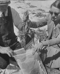 Cape Cod Times Archives - 86 best historical cape cod images on pinterest cape cod capes