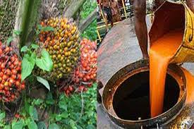 Minyak Cpo satu harapan kemendag tetapkan harga patokan ekspor komoditi kelapa