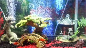 my 20 gallon asian theme tank