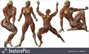 Images Female Anatomy Science Female Anatomy Body Stock Illustration I2909173 At