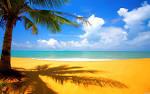 Wallpapers Backgrounds - Select Desktop Background Enjoy wallpaper (wallpapers palm tree beach wallchan Select Desktop Background Enjoy 1440x900)