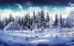 snowy forest desktop wallpaper 52 images