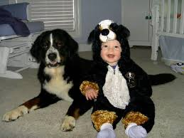 Funny Animal Halloween Costumes 18 Halloween Ideas Dog Lovers Images