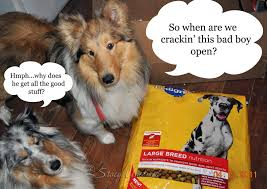 Dog Food Meme - pet food and rolex the ambassador aloha friday follow fun free