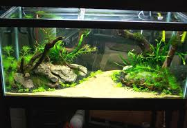 Aquascape Malaysia Cuisine Decorationsbuilt In Wall Aquarium Designs Ideas Using