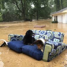 floating couch dogs on a couch floating in the flood album on imgur