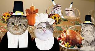 thanksgiving for college students as told by cats