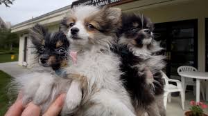 puppy mills are hubs of animal cruelty we don u0027t need their