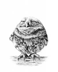 owl pencil drawing 1000 images about owl tatoo on pinterest owl