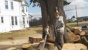 cheap tree service home