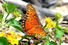 butterflies in and at iguazu falls during focus