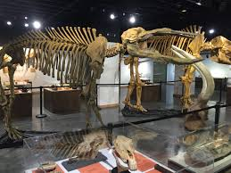 halloween city new iberia baroque u0026 bones joins fossils with symphony at lafayette science