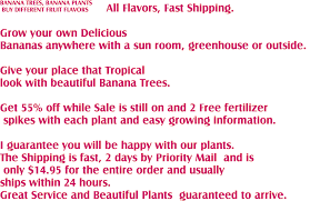 buy banana trees banana plants now on sale