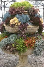 154 best succulent love images on pinterest succulents
