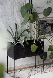 Apartment Plants 591 Best Indoor Plants Images On Pinterest Plants Indoor Plants