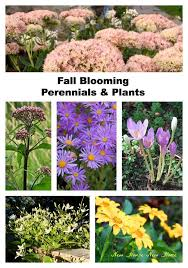 add some color to your fall garden hometalk