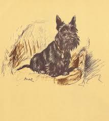 40 best lucy dawson scottie u0027s images on pinterest dogs drawing