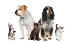 veterinary services at companion pet clinic in klamath falls