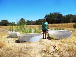 native pond plants invasive reed grass may benefit native urban amphibians the