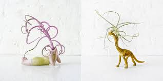 new ways to house air plants cool hunting
