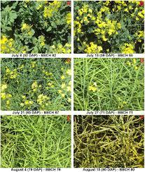 ontario native plants remote sensing free full text separating crop species in