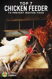 7 best chicken feeders for backyard flock that will prevent waste
