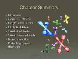 chapter 14 inheritance patterns and human genetics ppt download