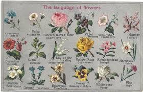 wedding flowers list wedding flowers significance of flowers in wedding