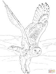 team umizoomi printable coloring pages snowy owl coloring pages seasonal colouring pages 8031