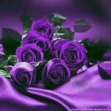 purple roses 221 best purple roses images on flowers pretty