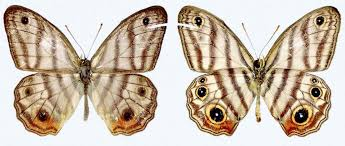 butterflies news articles information and facts