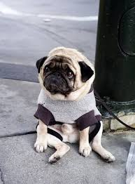 Depressed Pug Meme - sad animals gallery ebaum s world