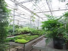 tropical nursery open day royal botanic gardens kew 19 u2026 flickr