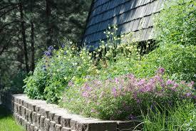 montana native plants mnps garden awards blackfoot native plants