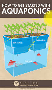 how to get started with aquaponics aquaponics hydroponics and fish