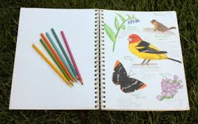 nature journaling with plt
