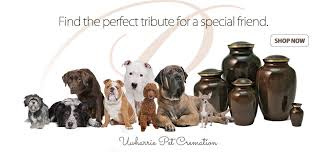 dog urns for ashes pet urns dogs cats urns for ashes cremation jewelry