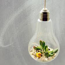 lightbulb money plant succulent hanging terrarium by dingading