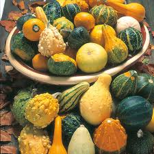 gourd ornamental mixed seeds from mr fothergill s seeds and plants