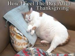 Thanksgiving Cat Meme - how i feel the day after thanksgiving thanksgiving pinterest