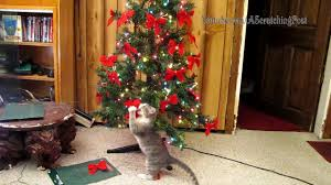 cats help set up and tear tree caturday